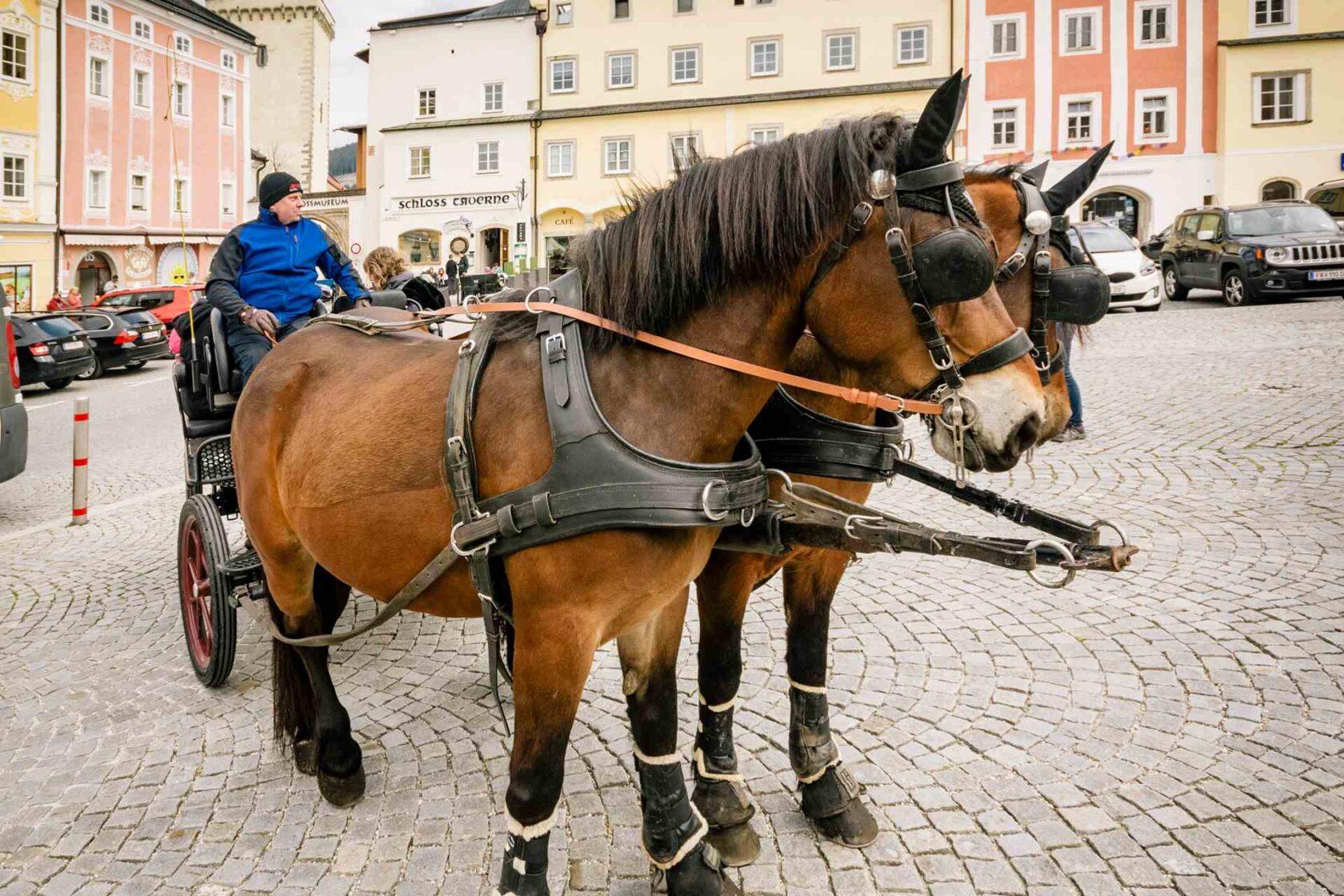 Pferdekutsche in Freistadt