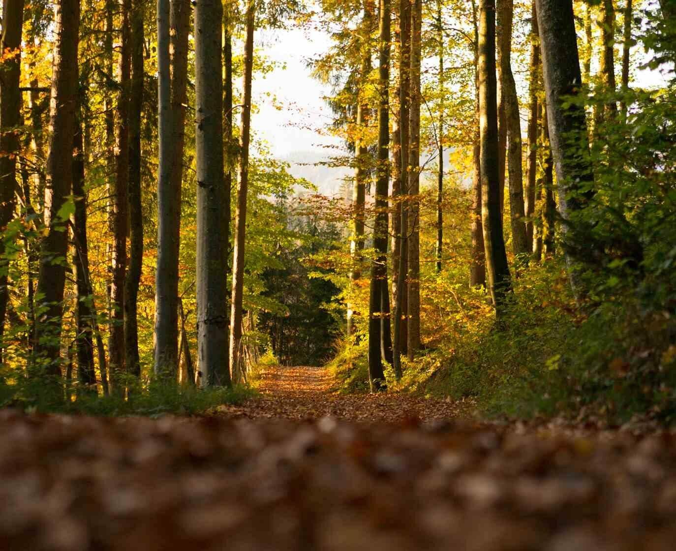 Spazierweg in Hallein