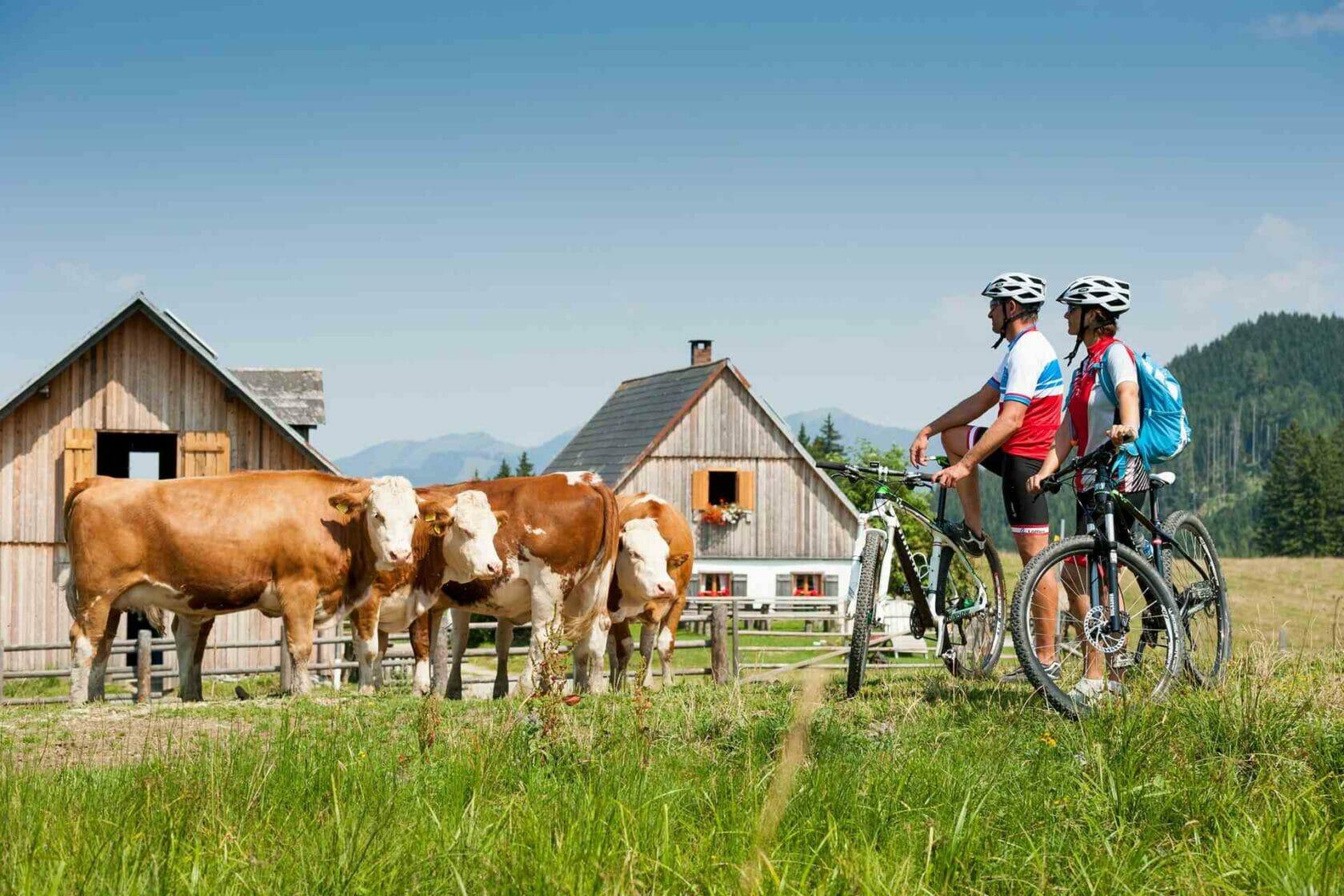 Radfahren im NAP Kalkalpen in Steyr